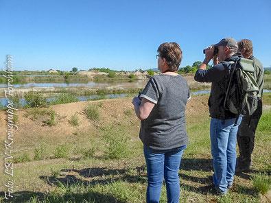 Auf den Wasserflächen der Büg gib es viele Vogelarten zu beobachten!