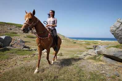 Arikok Nationalpark, Pferd, Aruba