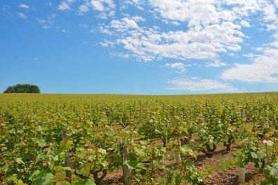 atelier-accolage-vignes-Vouvray-Touraine-Val-de-Loire-Rendez-Vous-dans-les-Vignes-Myriam-Fouasse-Robert