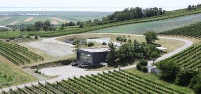 Hochzeit in Weinfeldern
