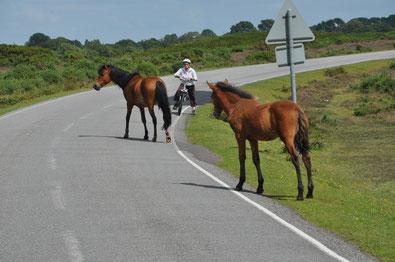 Unfall Pferd Straßenverkehr Haftung Pferdesachverständige Versicherung Haftpflicht