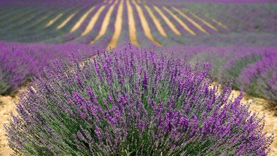 46 ans de Mariage : Un week-end en Provence