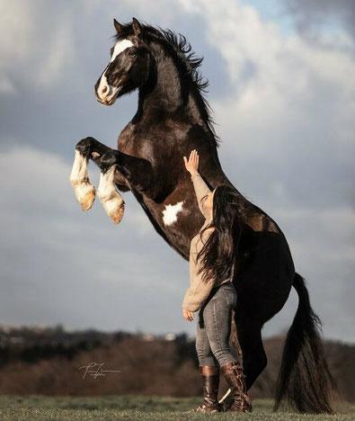 Pferd steigt steigen freiarbeit