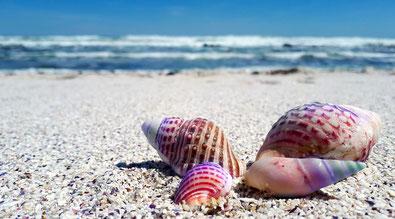 Muscheln am Strand - Bild zum morphischen Feld lesen