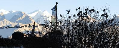 Vol d'oiseaux dans l'himalaya pour parler de collectifs et de vivre ensemble