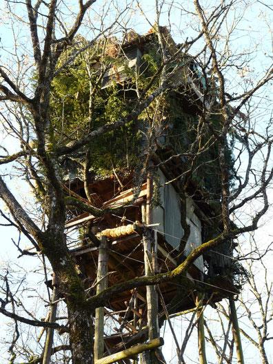 Palombière en forêt du Bager d'Oloron