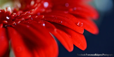 Fiori, macro, Flowers