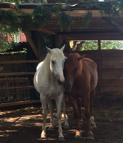 Energiearbeit Pferde