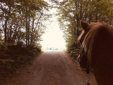 Tierenergetik Pferd