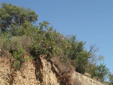 Niche écologique au Djebel Ayachi, Haut Atlas nord-oriental (Photo Frédérique Courtin-Tarrier)