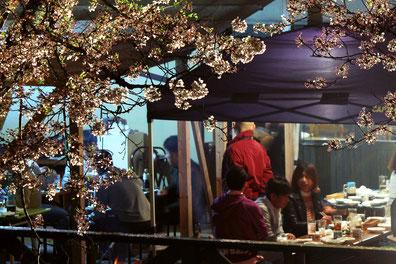 山本さん家_満開の桜の下でバーベキュー2