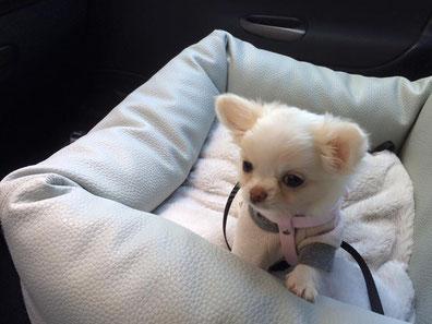 Quel petit chien choisir ?