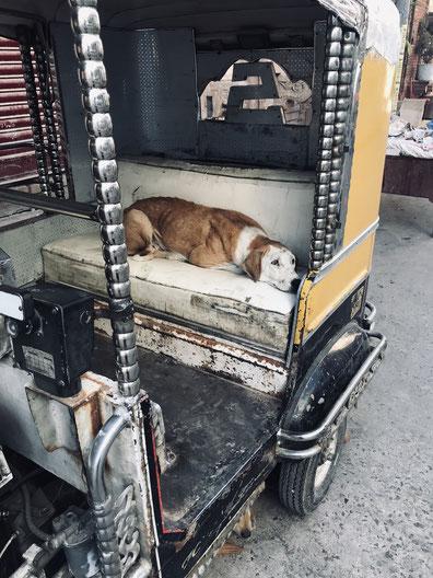 1 süßer Hund