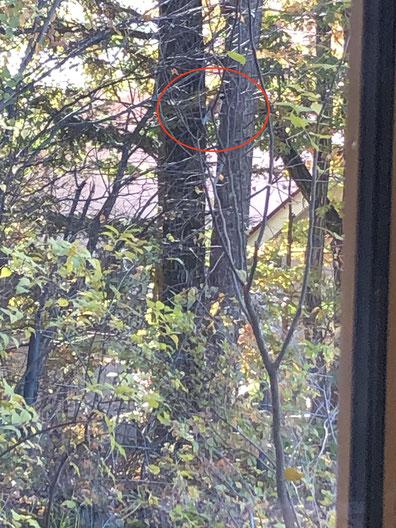 見づらいですが、赤丸のなかにいるのが事故直後の小鳥。ヤマガラ、、かな?