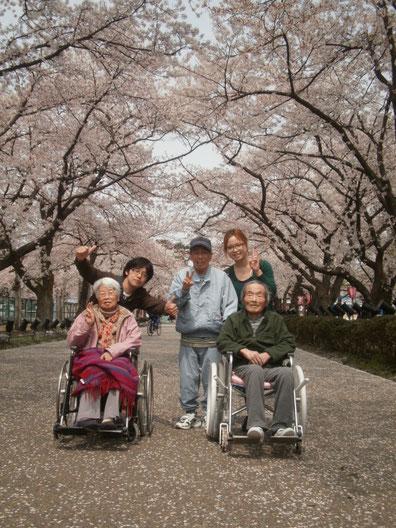 『桜のトンネルとじゅうたん』を独り占め。今年も出会えてよかった。