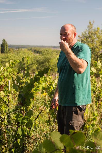 Jan Tailler L'Arbre Viké Vin des Côtes de Toul AOC Toul Vendange