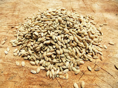 自然栽培米 自家採種の種籾