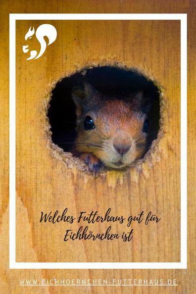 Eichhörnchen  schaut zufrieden aus einem Futterhaus