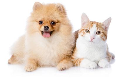 Hund Zwergspitz Katze