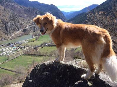 Kira, Kölscher vun demjet Hund