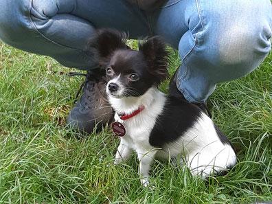 Maja, Chihuahua
