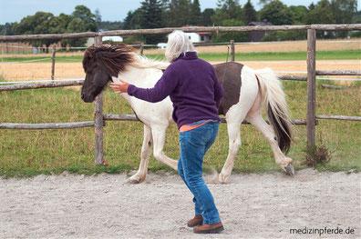 Pferd treiben, Bodenarbeit, Beziehung zu Pferd, Persönlichkeitsentwicklung, Bewusstseinsentwicklung, pferdegestütztes Lernen