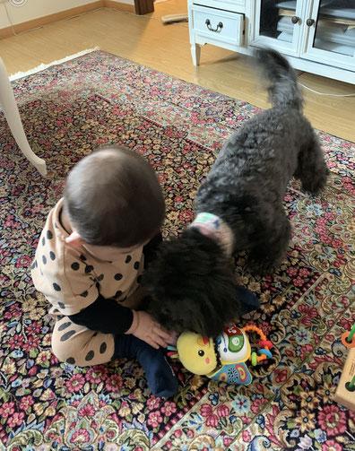 KERMAN ドザールサイズ 赤ちゃんもワンちゃんも大好きいつもここで仲良くお遊び!