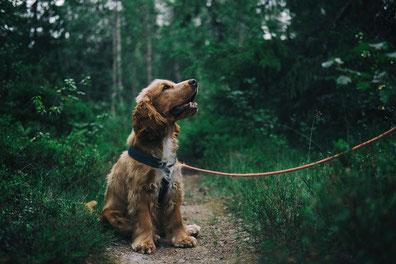 je hond begeleiden, steunen en beschermen