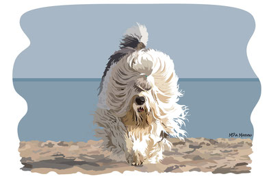 disegno-drawing-bobtail-cane-dog-digital-art-pewee-beach-spiaggia-corre-running-