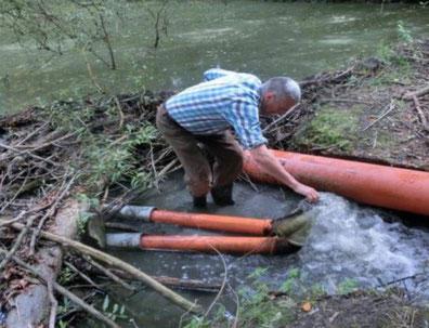 LBV-Aktiver beim Verlegen von Rohren durch einen Biberdamm