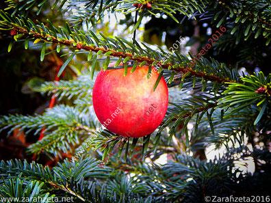 Zarahzetas Fotografie - Weihnachtszeit, Apfel als Christbaumkugel ©Zarahzeta2016