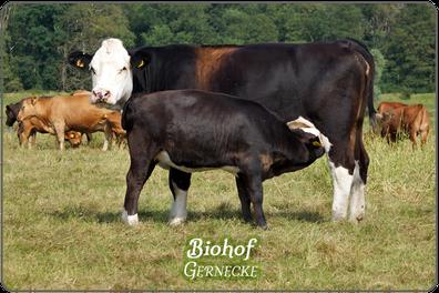 Biohof Gernecke | Mein BioRind