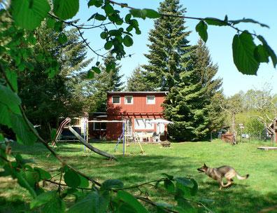 Urlaub mit Hunden MV, Ferienhaus mit Zwinger, Wald am See eingezäuntes Grundstück