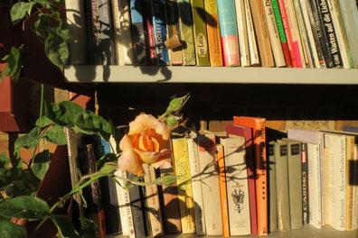 """Blumen im Buchdorf, gesehen am """"Bücher-Consum"""" in Mühlbeck-Friedersdorf/ Foto: Peter Hinke"""