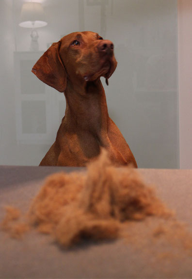 Hundefellpflege: Keine Schur