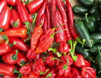 Foto: www.hot-pain.de