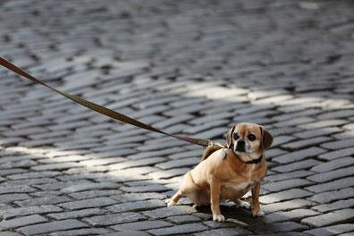 Stress, Beziehung, Verhalten, Stimmungsübertragung Hund