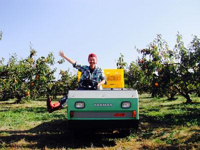 柿農家の様子