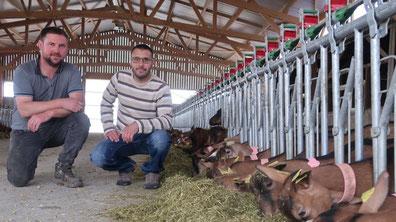 Romain et Cyril viennent de refaire un bâtiment pour accueillir 352 chèvres et se sont offert une salle de traite ultramoderne. En plus du fromage, ils proposent désormais leur lait.