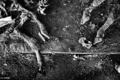 photo: pierpaolo mittica