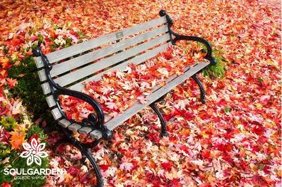 Langsames loslassen im September  - Feng Shui im Jahreskreis von SOULGARDEN