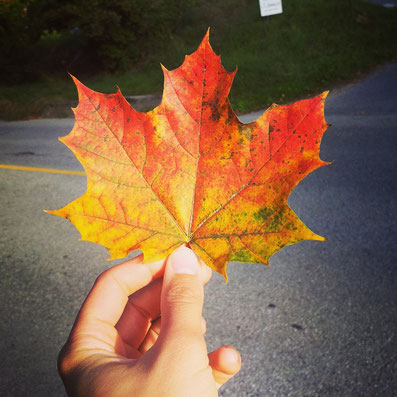Canadian marble leaf with every color