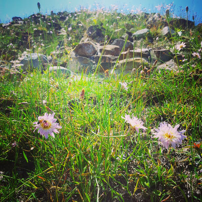 Spring time in Oaxaca at Monte Alban