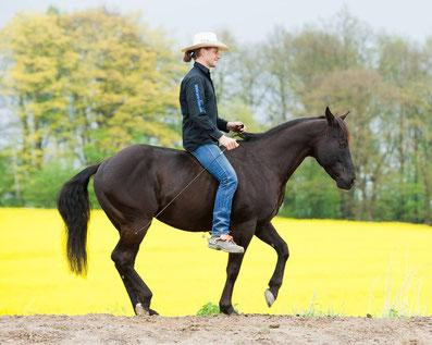 Thomas Günther, Pro Ride Horsemanship, Freiarbeit, freies Reiten, Hengst, Westernpferd