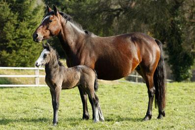 Nos poneys et chevaux sont des vedettes