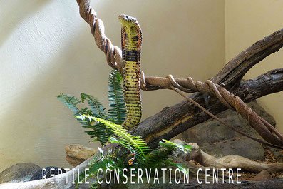 Reptielen in Zuid-Afrika