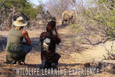 Wild kijken in Zuid-Afrika
