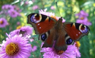 Mariposa - Schmetterling - ein Symbol für Entfaltung und Lebensfreude
