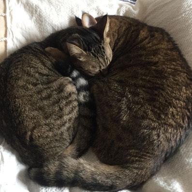 東京 ペットシッター 猫