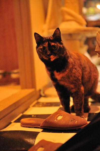 猫 ペットホテル 東京都大田区 エマ
